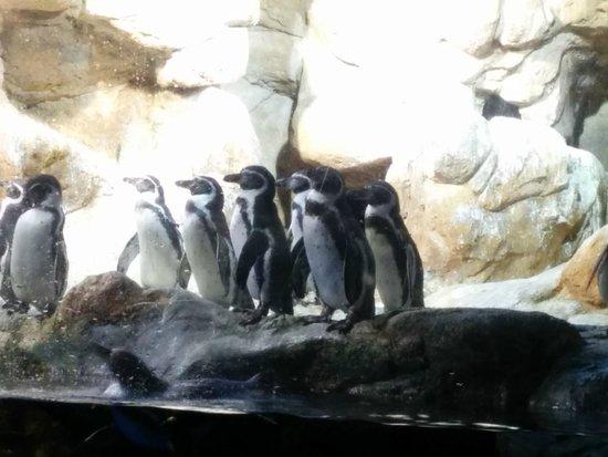 L'Aquarium de Barcelona : Les pingouins !!
