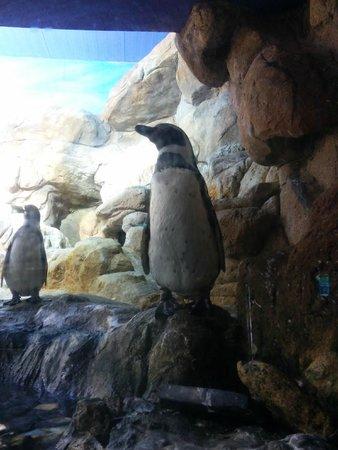 L'Aquarium de Barcelona : Le clou de la visite