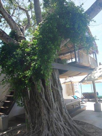 Eden Beach Bungalows : Massage dans les arbres