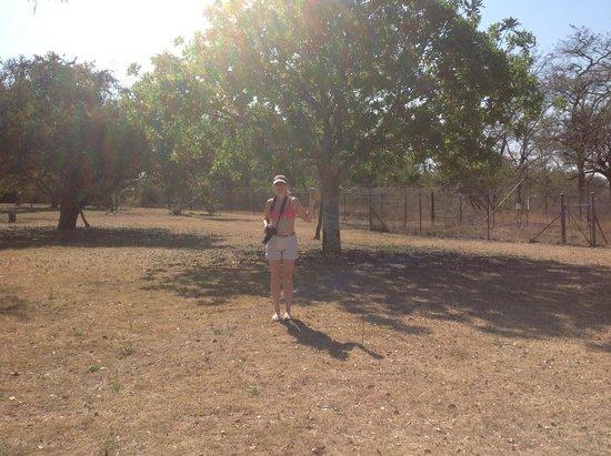 Pretoriuskop Restcamp: The space behind the chalets.