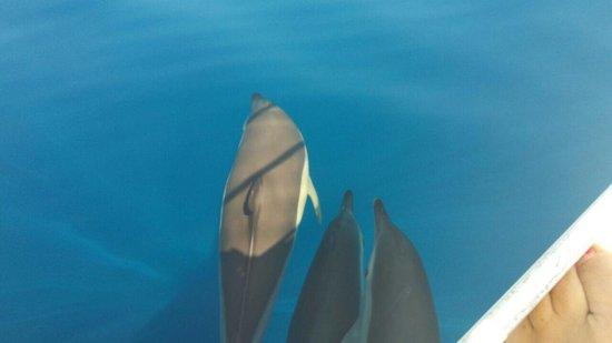 Sail the Day - Skiathos Sailing Trips: Delfine im August: seltener Glücksfall