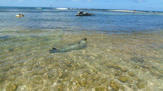 Poipu Plantation Resort: Poipu Beach visitor
