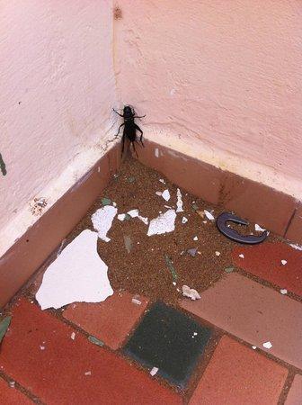 Hotel Ryad Mogador Essaouira : BUG IN ROOM