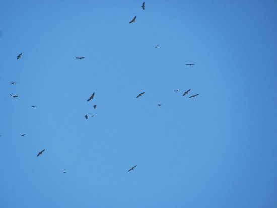 Via Verde de la Sierra : Vultures
