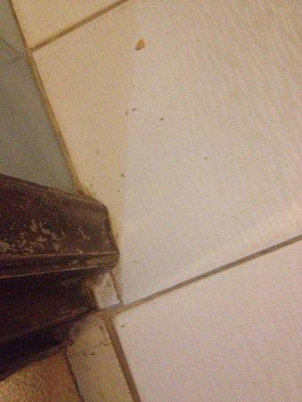 Horizon Beach Hotel : Particolare della pulizia del bagno(con formiche) al mio arrivo