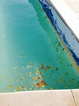 Sunwing Waterworld Makadi Hotel: Leaves and scum floating on the water