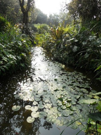Giardini La Mortella : laghetto