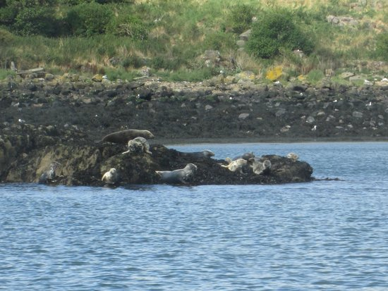 Inchcolm Abbey : Seals