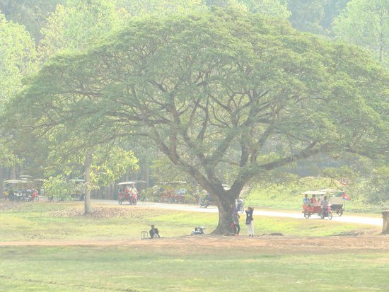 Ta Prohm : вот такие деревья )))