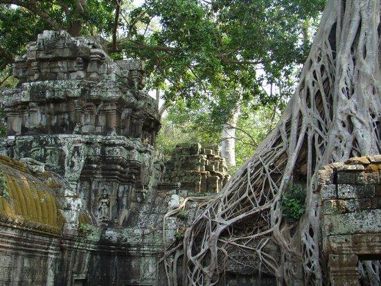 Ta Prohm : Ангкор Ватт