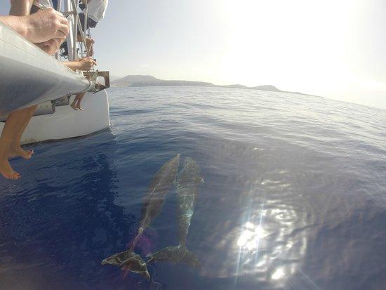 Mustcat: Dolphins alongside