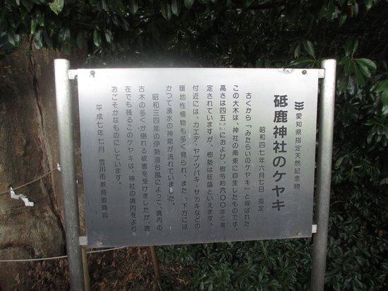 Toga Shrine: ケヤキの説明