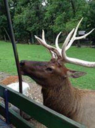 Rolling Ridge Ranch: wagon ride