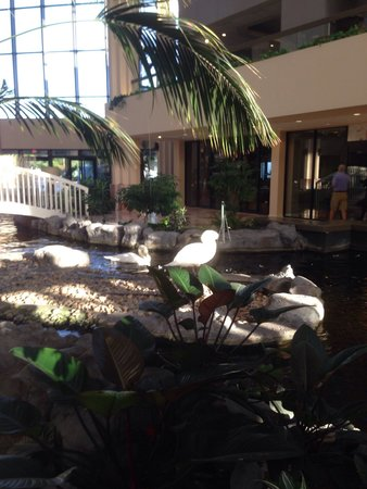 Embassy Suites by Hilton Palm Beach Gardens PGA Boulevard: Beethoven and Bach - the swans.