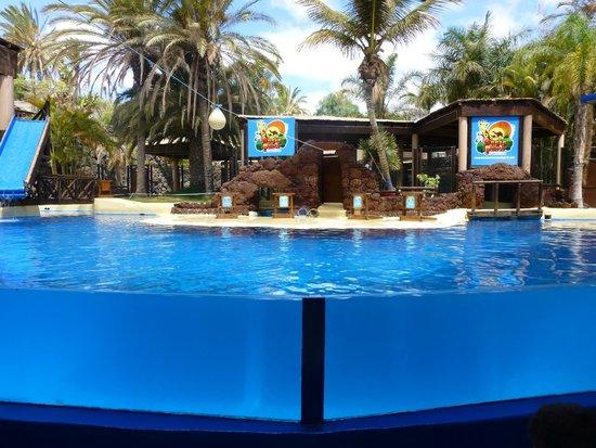 Sealion Show - Picture of Oasis Park Fuerteventura, Fuerteventura - TripAdvisor