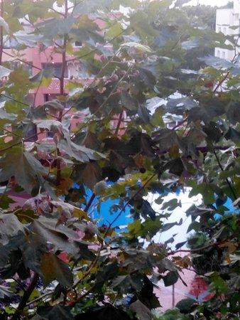 H10 Mediterranean Village : Ramas de árboles en terraza.