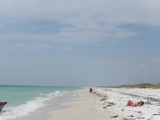 Shell Island : Beautiful beach