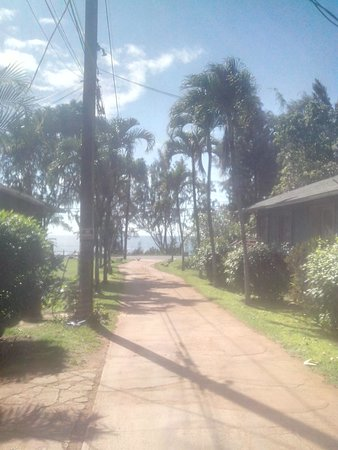 Backpackers Vacation Inn and Plantation Village : view