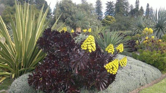 Rooting Cut Succulents - El blog de Martha Stewart