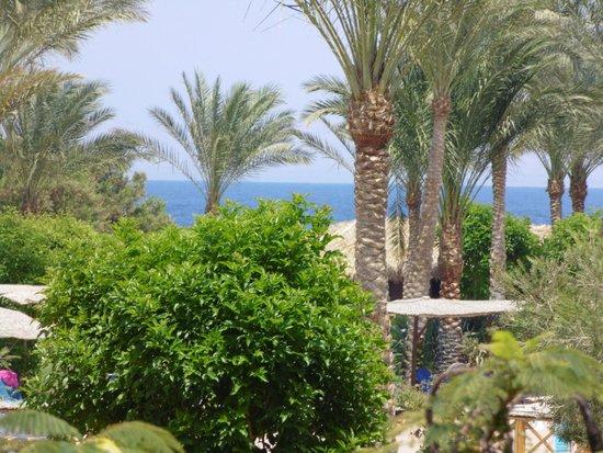 Jaz Mirabel Beach: hotel