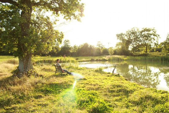 Dorset Country Holidays Glamping: lake onsite