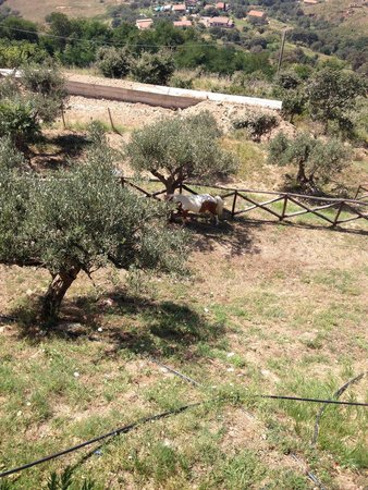 Agriturismo La Palombara: Agriturismo
