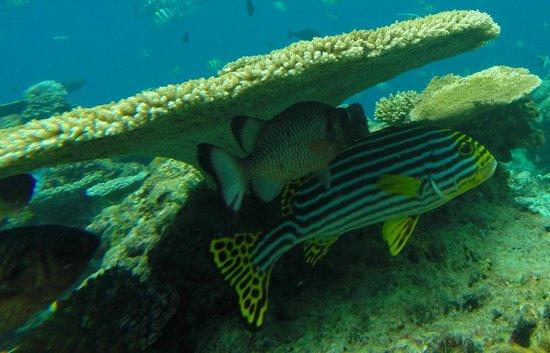 VOI Maayafushi Resort: in Immersione maya