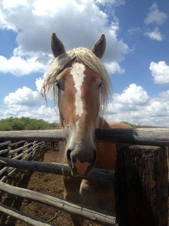 Yellowstone Horses - Eagle Ridge Ranch: I loved his hair do