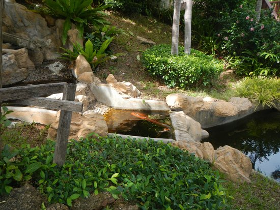 Q Signature Samui Beach Resort : Stagnant water features, home to mossies