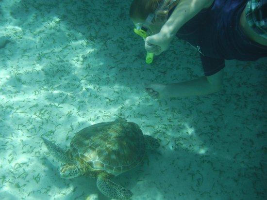 No Worries Tours: Hol Chan - Sea Turtles!!
