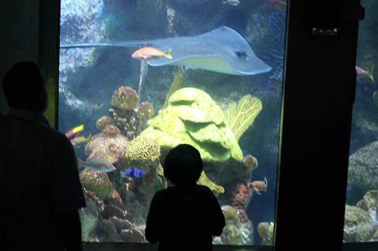 Tuyaux Central Picture Of New England Aquarium Boston Tripadvisor