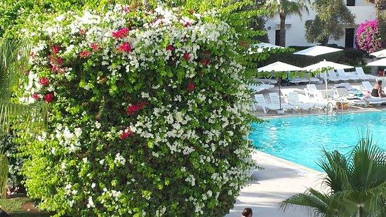Royal Decameron Tafoukt Beach Hotel: Espace piscine