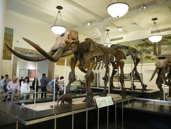 American Museum of Natural History : Экспонаты в музее