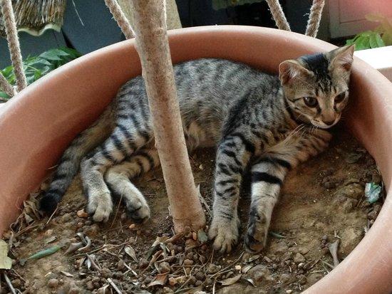 Svoronata, Grecia: Simpatico gattino del posto