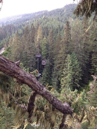 Ziptrek Ecotours : One of the lines on the Bear course.