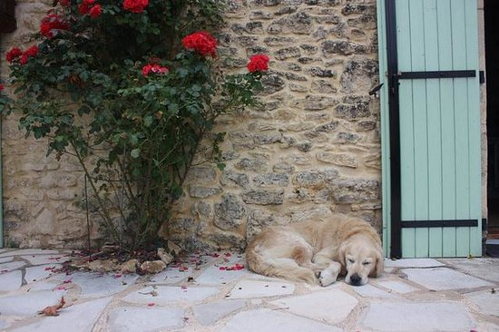 Hotel de la Ferme Lamy: French dog chilling on the patio