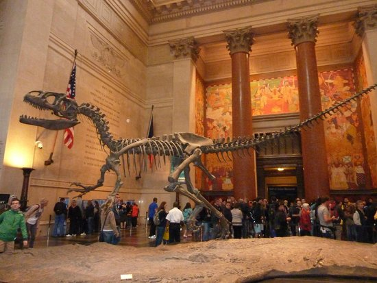 Reviews American Museum Of Natural History