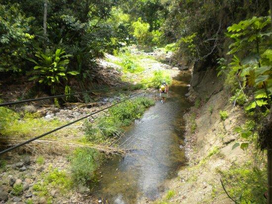 Treetop Adventure Park: Zipping through the jungle
