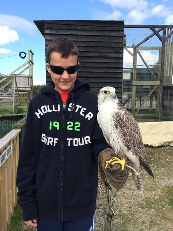 The Cornish Birds of Prey Centre: First bird he held. Chris looking wary.