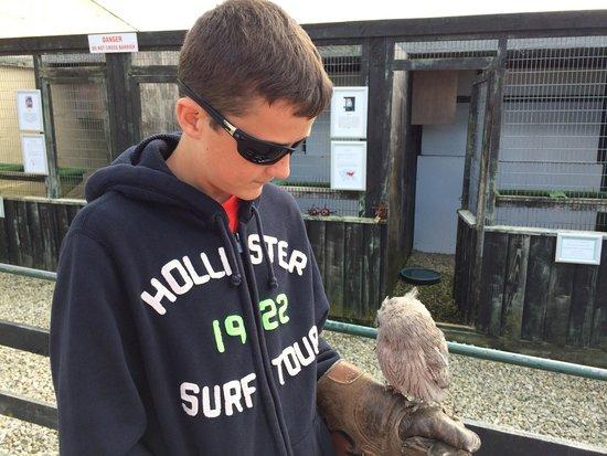The Cornish Birds of Prey Centre: Camera shy Twiglet.