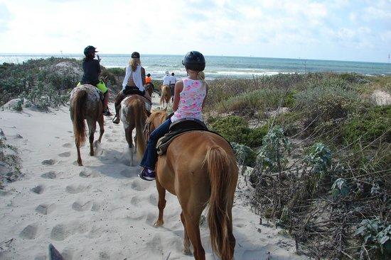 Horses On The Beach: Corpus Christi: Heading to the beach