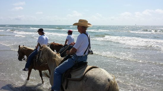 Horses On The Beach: Corpus Christi: In the surf