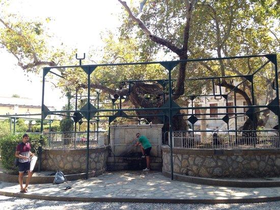Hippocrates Tree: Platano dove è presente una piccola fontana con scritte in arabo