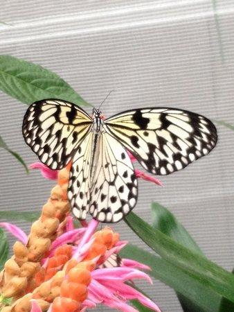 Insectarium de Montréal : La beauté des papillons en liberté