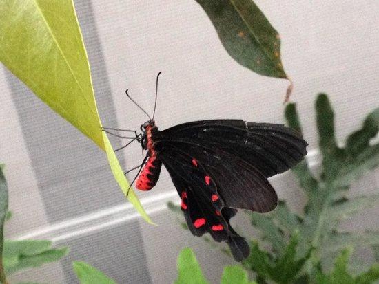 Insectarium de Montréal : De toutes les couleurs