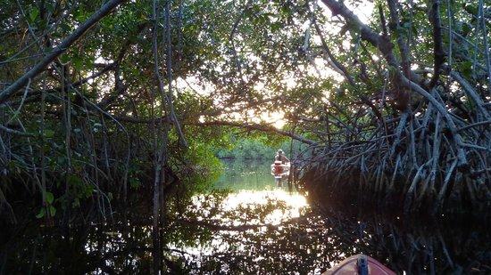 Tour The Glades - Private Wildlife Tours: Die Sonne geht auf