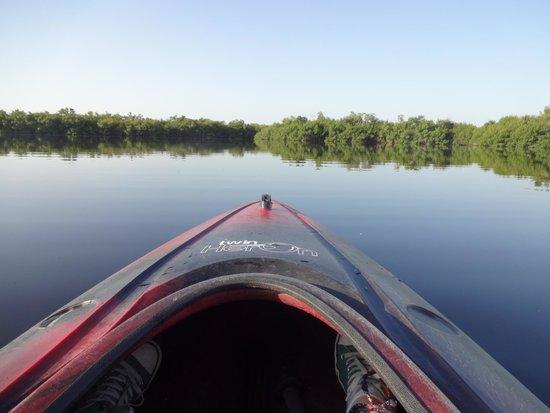 Tour the Glades : Wunderschöne Everglades