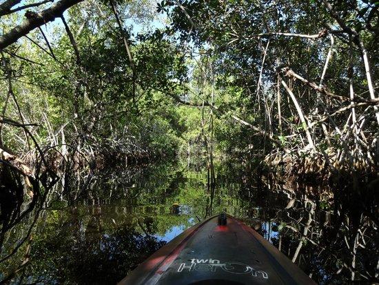 Tour the Glades : Ein echtes Abenteuer