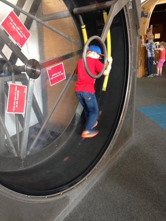 We The Curious: Hamster wheel.