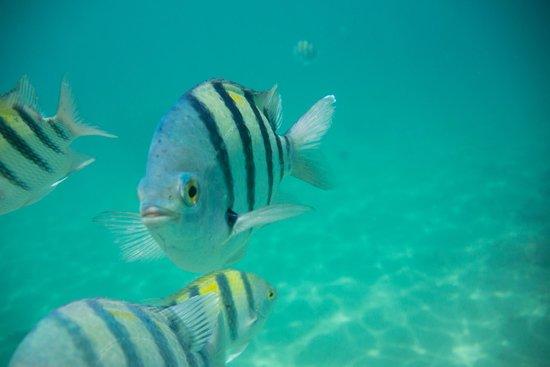 Beach Albatros Sharm : Местная рыбка)